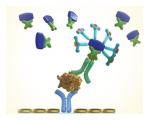 Enzyme-linked immunosorbent assay (ELISAs)